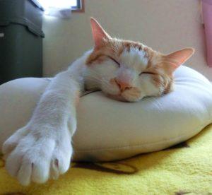 2月22日『猫の日』