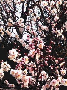 春の先取り